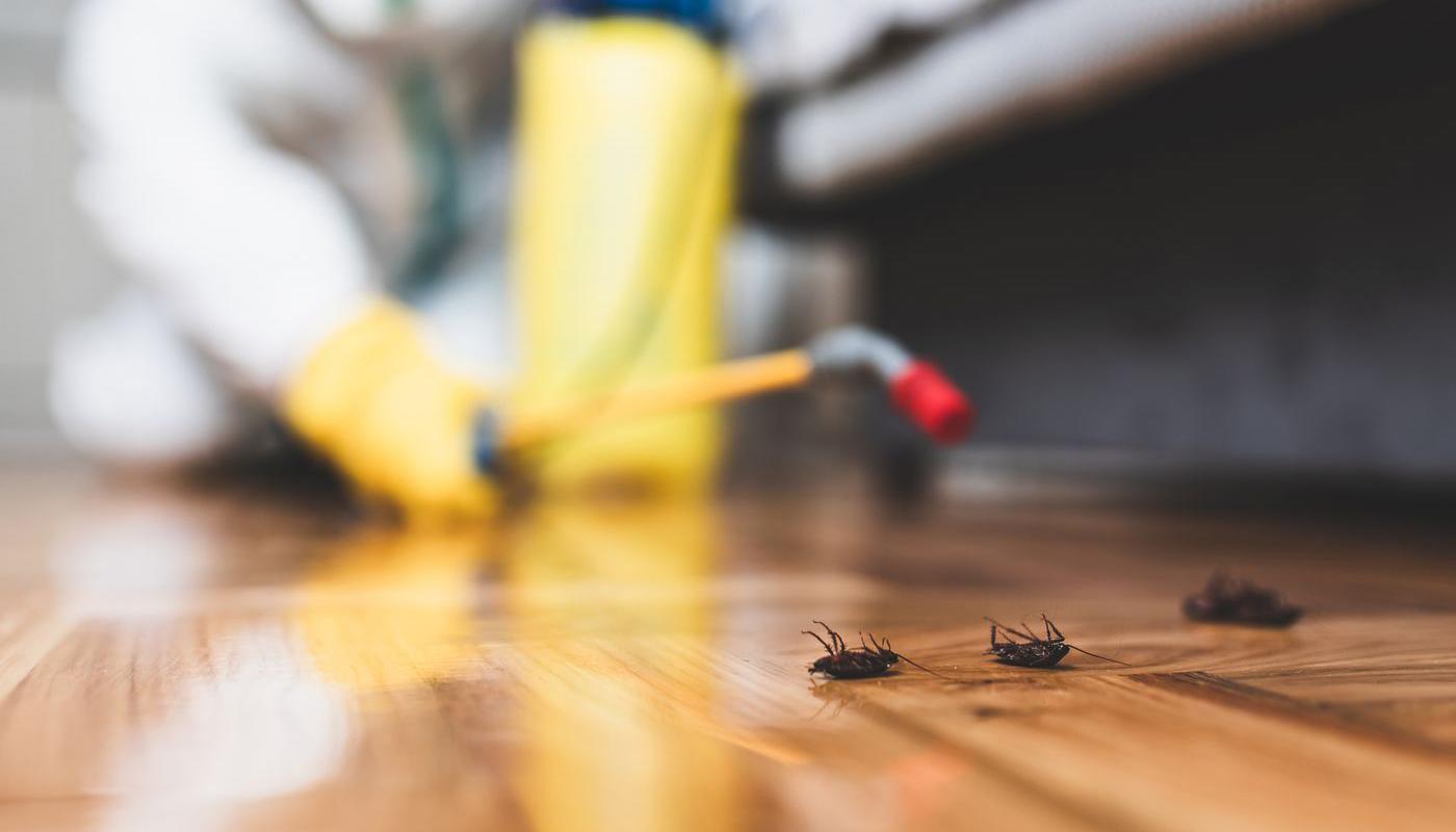 Cockroach Treatment Regina Pest Control