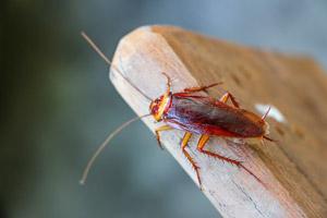 Cockroach Treatment in Regina SK