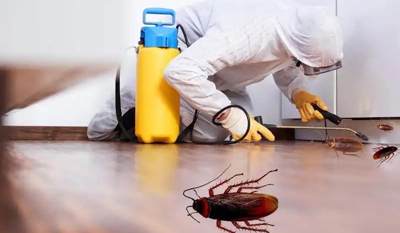 Cockroach Control In Regina