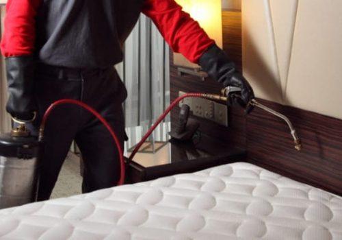 Bed bug Removal Regina